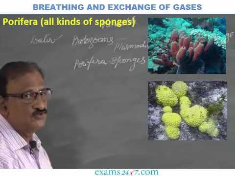 NEET BIOLOGY - BREATHING AND EXCHANGE OF GASES Video1