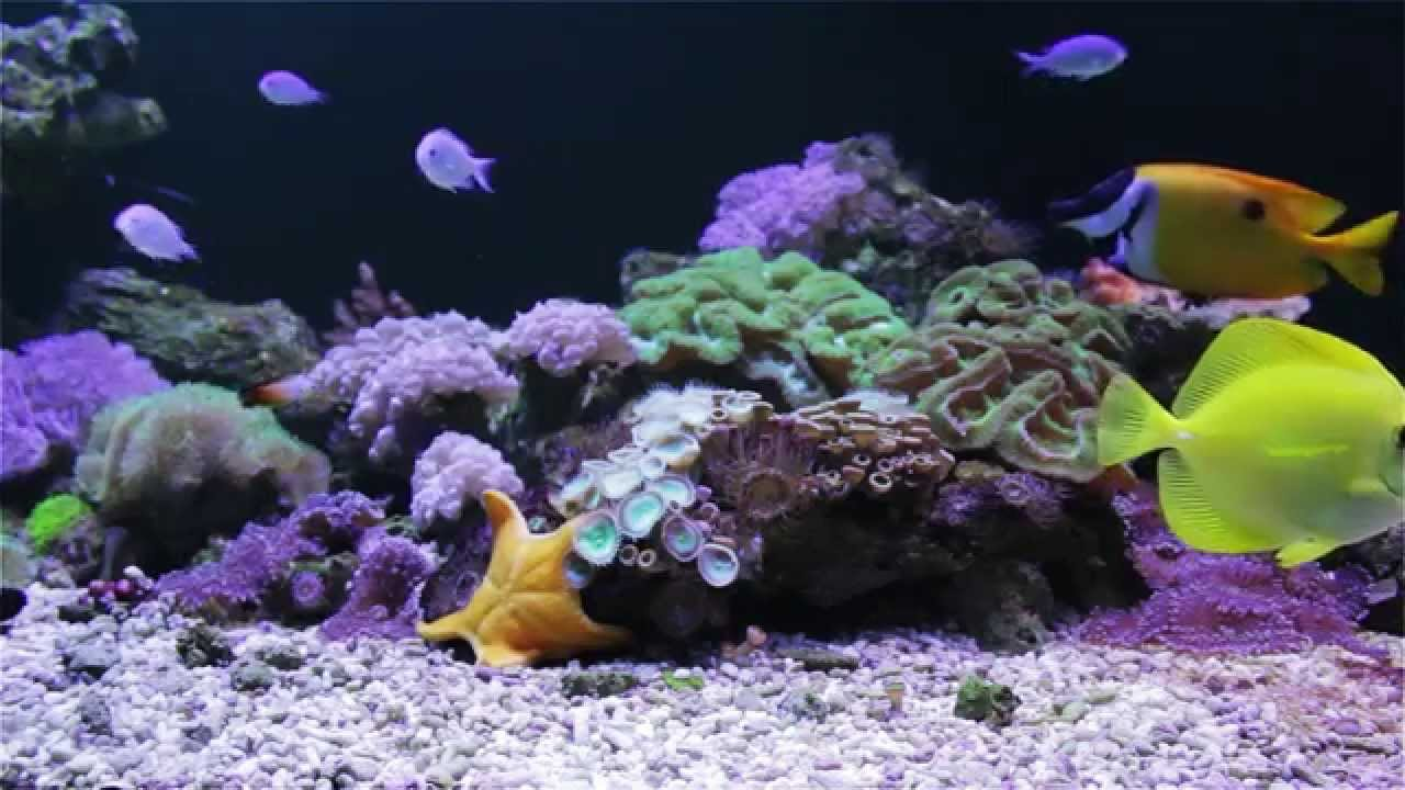 C Reef Screensaver Video The