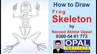 Easy way to draw SKELETON