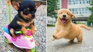 Baby Dogs  Cute and Funny Dog Videos Compilation #6 | Funny Puppy Videos 2021