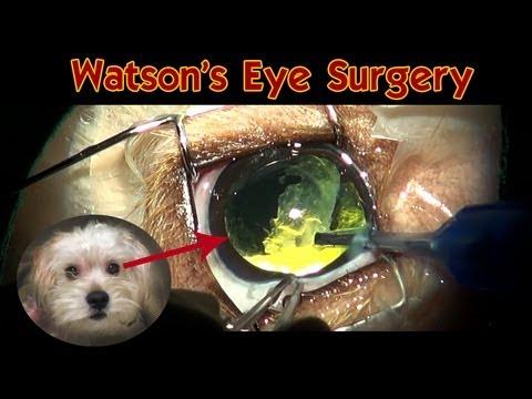 Watson's eye surgery: Dog Cataract Surgery (no blood) - Please share.