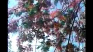 Download Hindi Video Songs - amar swapno tumi ananda ashram