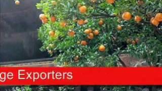 Jazba TV Orange Exporters Pakistan