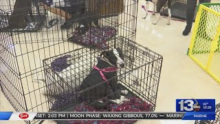 Dillard's and BFF Animal Rescue host adoption day