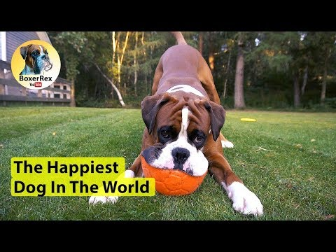 The Happiest Dog In The World (A Zhiyun Crane-M 3-Axis Gimbal Test)