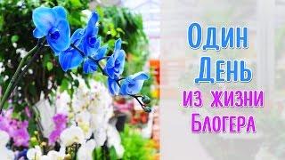 Открытие нового ОБИ ( OBI ), Мастер-классы, Марат Ка и Андрей Волков / DIY NataliDoma