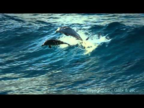The Ocean (Goldripp Remix) ~ Chill Out Ibiza Vol. 3 ~ Dolphins & Humpbacks Love of the Ocean [HD]