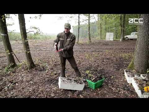 Інформаційне Агентство АСС: Буковинські лісівники висадили 60 тисяч дерев