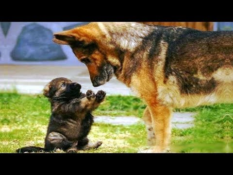 ♥Cute Dogs and Cats Doing Funny Things 2018♥ #5 - Funny Cat and Dog compilation
