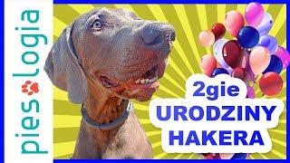 2gie urodziny Hakera