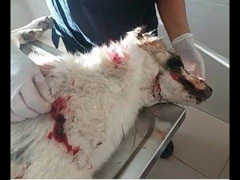 Кровавая расправа над бездомными собаками