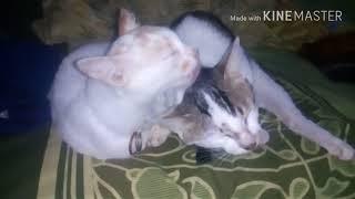 Sri Fayola-Manghapuih Jajak Cinto (cover kucing) mp3