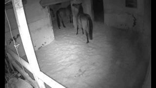 Repeat youtube video Pferdeunfall beim schlafen