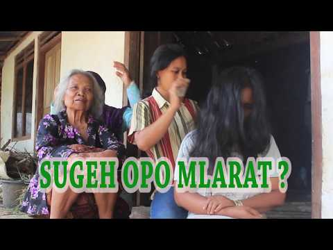 SUGEH OPO MELARAT? - Parody Jawa bahasa Indonesia - Download Video Lucu