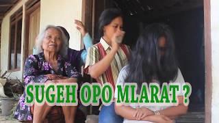 Gambar cover SUGEH OPO MELARAT? - Parody Jawa bahasa Indonesia - Download Video Lucu