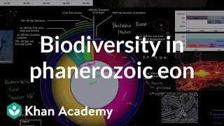 Biodiversity Flourishes in Phanerozoic Eon
