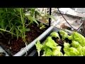 蔬菜育苗 寶特瓶平行式重直掛架