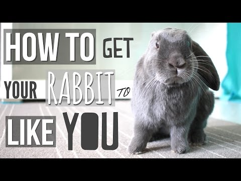 How To Get Your Rabbit To Like You