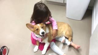 Собака пытается успокоить плачущую девочку