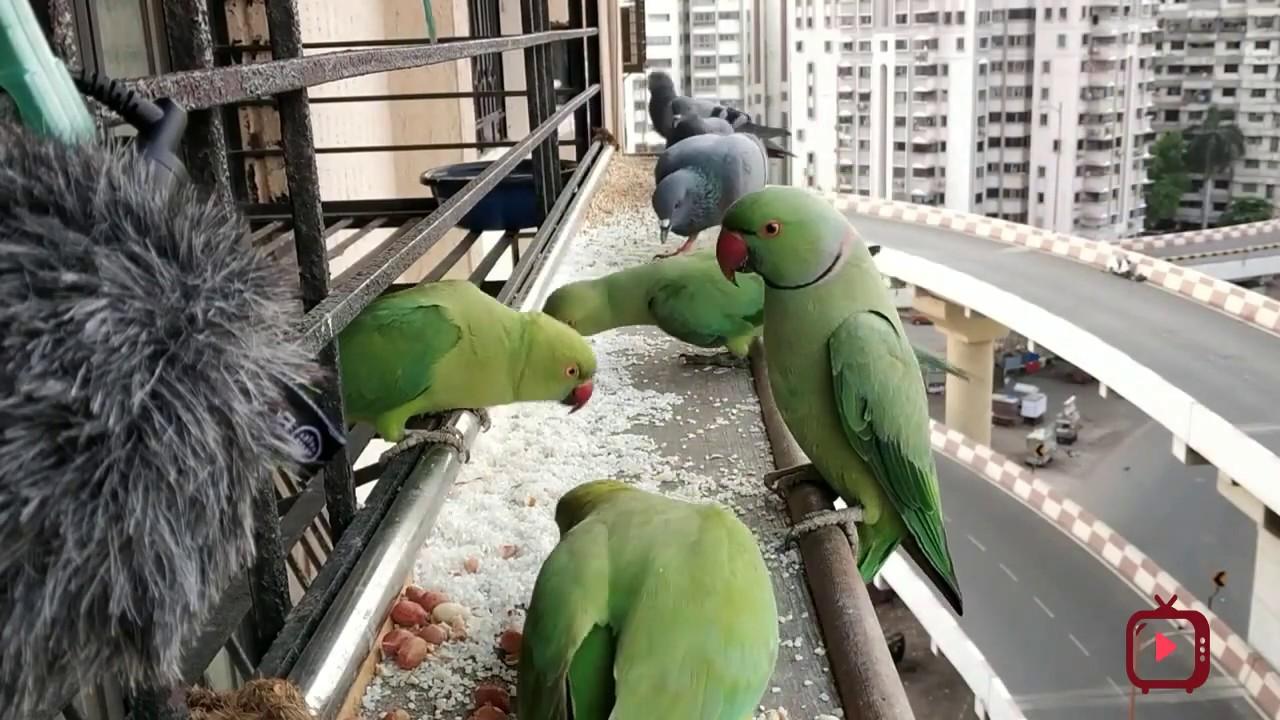 Compilation of My Bird Feeding Videos For YouTube Creators