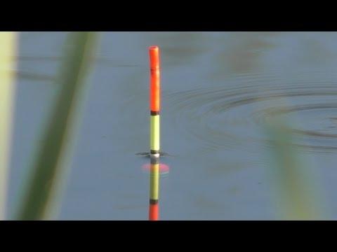 Рыбалка. Ловля на пружины и поплавок. My fishing.
