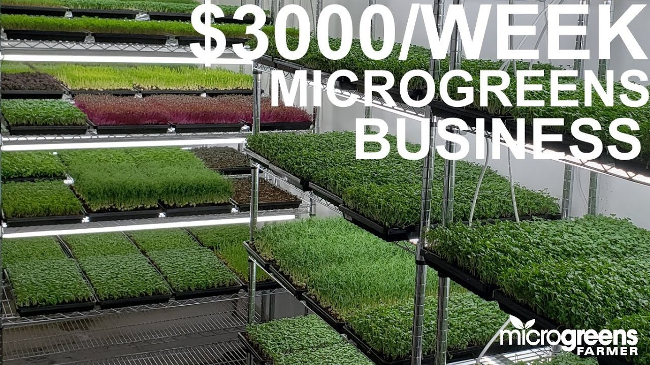 microgreens business selling $3000 per week to restaurants ...