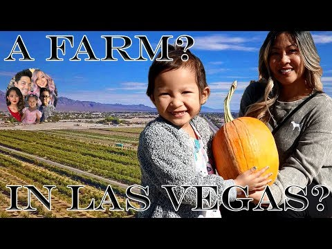 Halloween | Las Vegas | Pumpkin Patch | Gilcrease Orchard