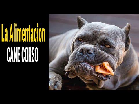 la-alimentacion-del-#perro-#cane-corso