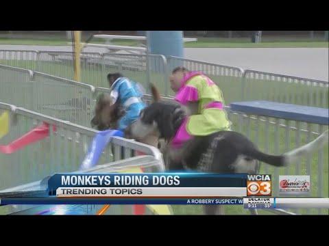 monkey dog race