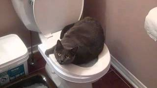 Cat toilet training gone wrong