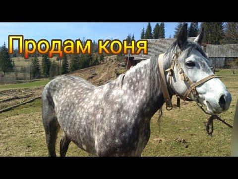 Укрощение коня - традиция