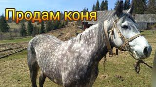 Продам коня  🎠horse, продажа лошадей, купить коня