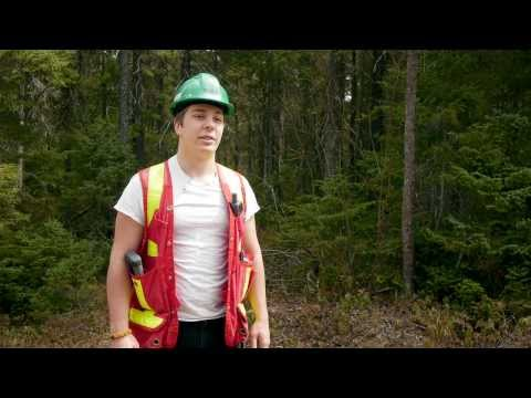 Forestry - Environment and forest resources
