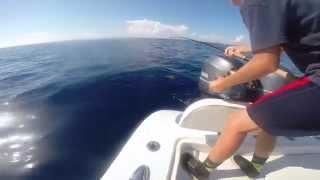 Memorial Day Weekend Fishing - Boca Raton - 26' Yellowfin Hybrid