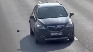 В Калининграде водитель спас котенка на дороге