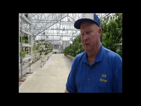 CEA Farms Greenhouse