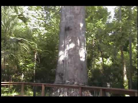 We remember Pappa at Big Tree Park, Orlando
