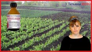 ПЕРЕКИСЬ ВОДОРОДА - ЛУЧШЕЕ УДОБРЕНИЕ для растений и не только!!