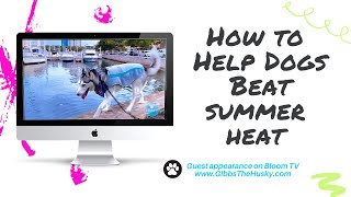 How To Help Your Dog Beat Summer Heat Safely