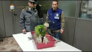 Porto di Bari, sequestrati due pappagalli protetti