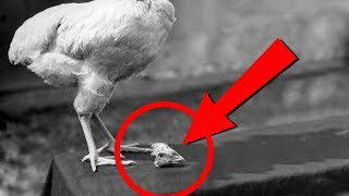 14 CRAZY Facts That Sound Too Fake To Be True!