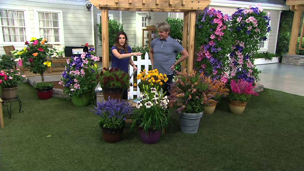 Cottage Farms Dazzling Designs 5-pc Butterfly Garden on QVC