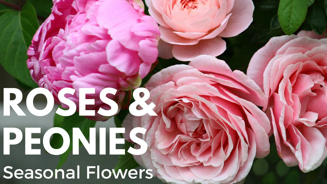 seasonal cut flowers garden rose and peony flower arrangement tutorial