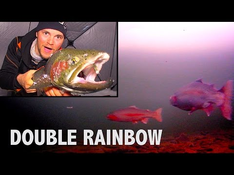 Hectic Rainbow Trout Double - Barbe Lake, Manitoba