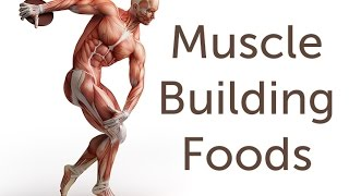 How To Gain Muscle With Fast Best Muscle Building Foods
