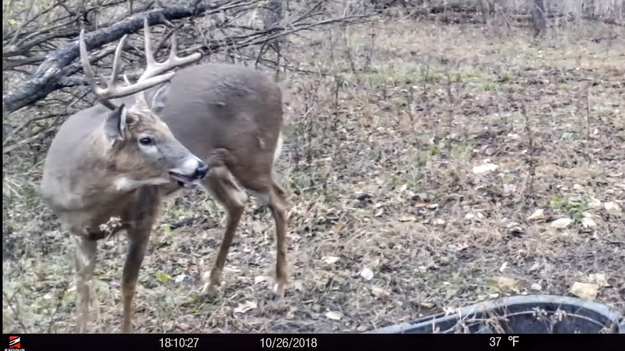 Best 5 Tips For Finding GREAT Deer Hunting Land