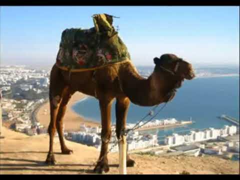 Армянские Частушки - на горе стоит верблюд #2