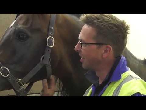Pferde in der Lufthansa Cargo Animal Lounge (DE)