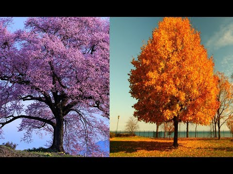 Теплые цветотипы внешности Весна и Осень