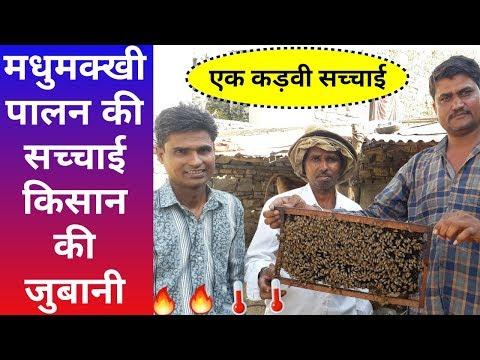मधुमक्खी पालन कमाई की वास्तविक सच्चाई, Beekeeping Farming Earning Expose - Agritech Guruji